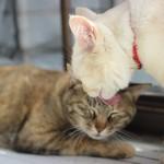 Toxoplasmosis y gatos