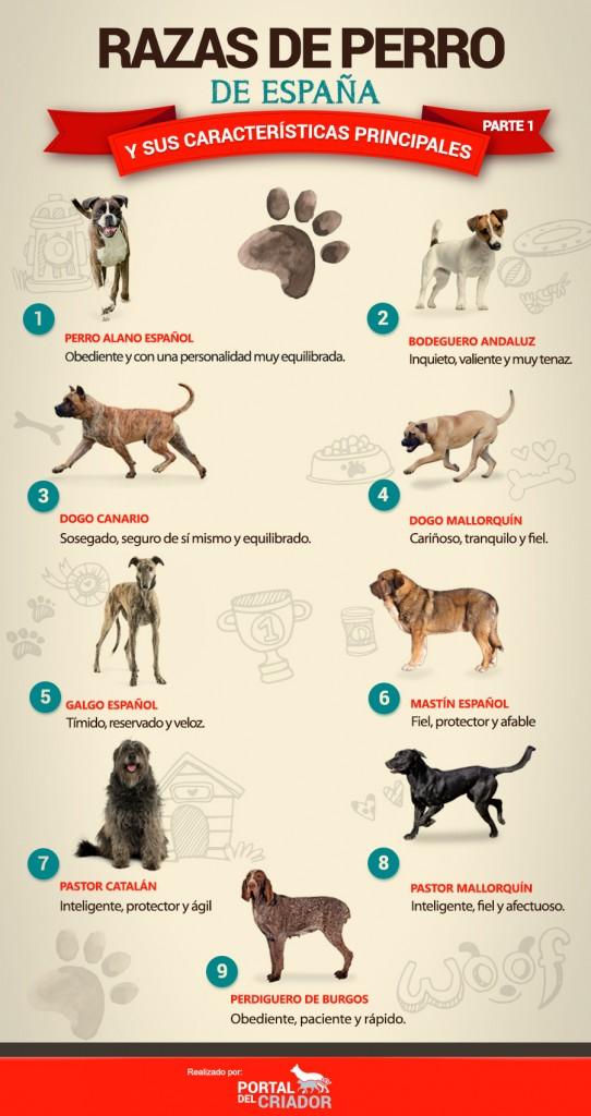 tipos de perros españoles infografia portal del criador PARTE 1