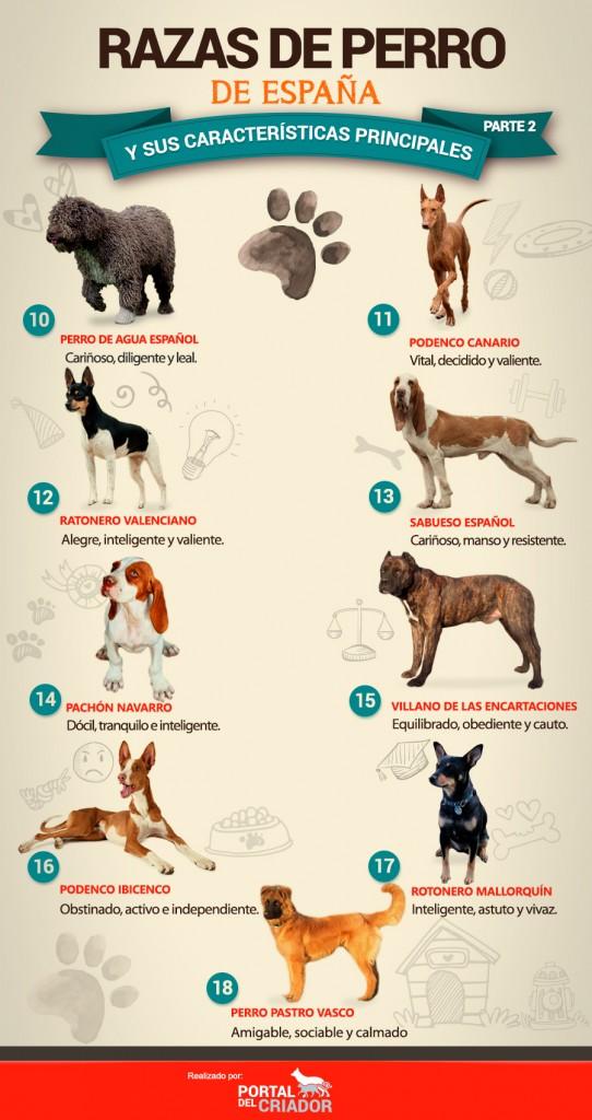 tipos de perros españoles infografia portal del criador PARTE 2